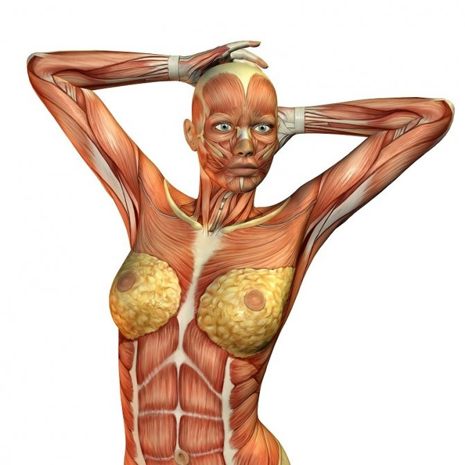 анатомия полового акта