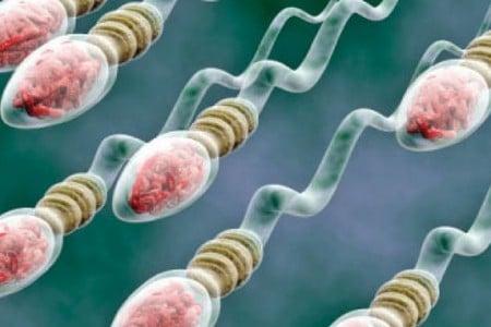 Как копится сперма
