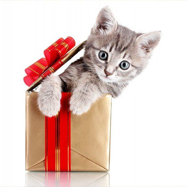 маленький котенок в подарочной упаковке