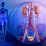 мочеполовые инфекции