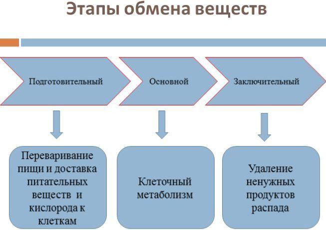 Обменные процессы