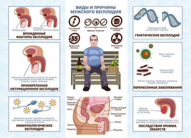 Олигоспермия. Основная проблема мужского бесплодия.