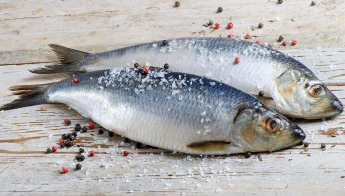 Самая полезная рыба - сельдь