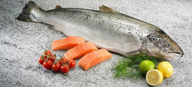 Самая полезная рыба - семга