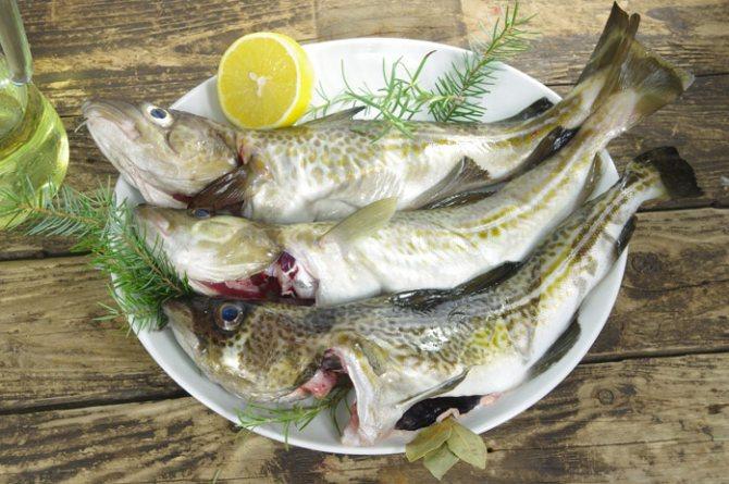 Самая полезная рыба - треска